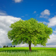 Tree on green meadow — Stock Photo