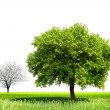 Spring tree — Stock Photo #7436013