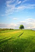 Green landscape — Foto Stock