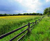 Uprawy rolne — Zdjęcie stockowe
