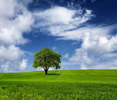 Oak tree on a cloudy day — Stock Photo
