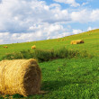 Golden bales in the countryside — Stock Photo