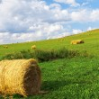 Golden bales in the countryside - Stock Photo