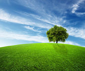 Green environment — Stock Photo