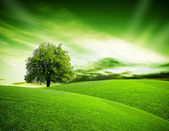 Eco green planet — Stock Photo