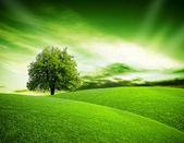 Planète eco vert — Photo