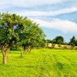 Country green landscape — Stock Photo