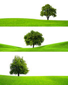Three trees — Stock Photo