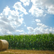 Agricultural field -  