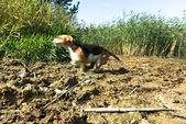 Pes na hřišti — Stock fotografie