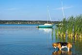 Dog in lake — Stock Photo