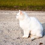 Cat, animal series — Stock Photo