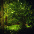 Junglejungle - Photo