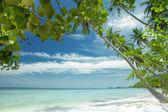 Cruise, bay, shore, shoreline, palm, coast, waterside, beach, plage, ocea — Stock Photo