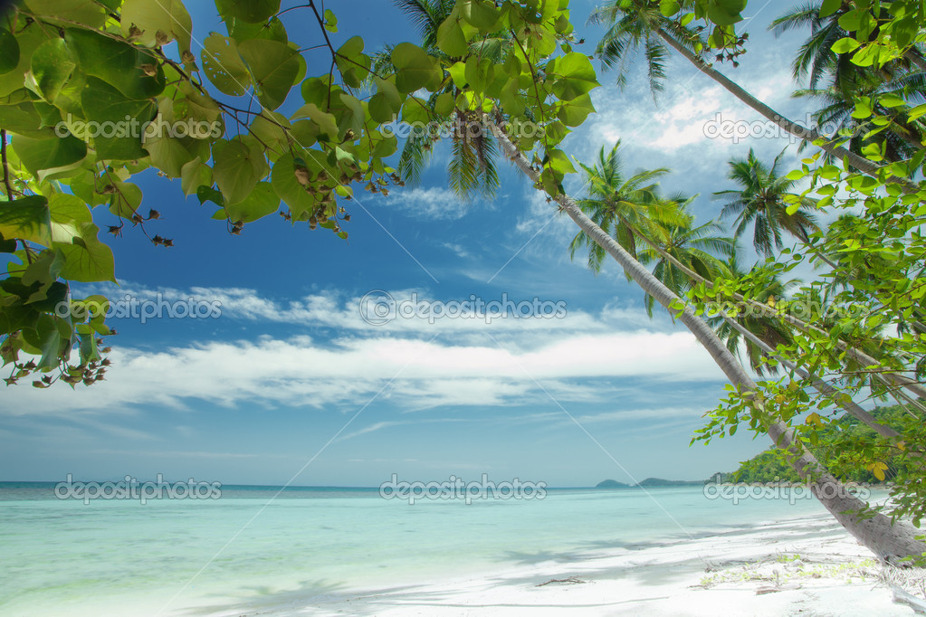 Fragment like View of nice tropical  coast with some palm — Stock Photo #6930176