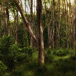 Panoramic view of nice misty tropical forest — Stock Photo #6973483