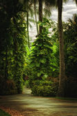 Forestforest — Stock Photo