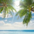 Cruise, bay, shore, shoreline,  palm,  coast, waterside, beach, plage,Coast — Стоковая фотография