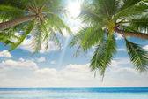 Cruise, bay, shore, shoreline, palm, coast, waterside, beach, plage,Coast — Stock Photo