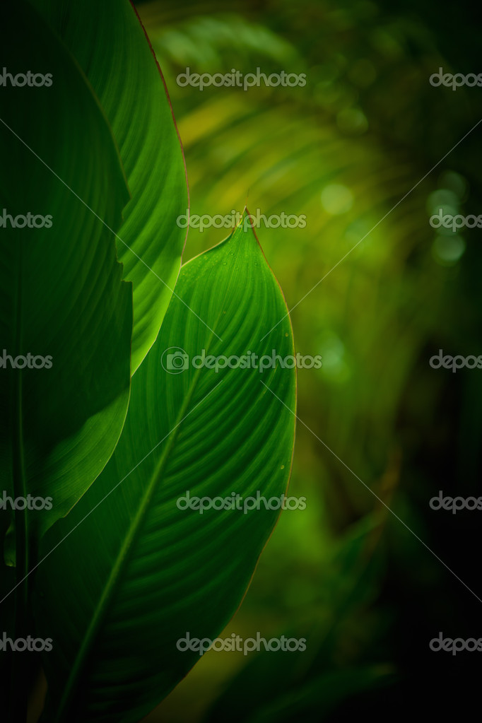 Close up view of  tropical plant on color back — Stock Photo #6992305