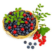 Blueberries with red currants — Stock Photo