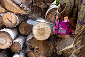 Firewood with chainsaw — Stockfoto