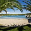 palm beach — Stockfoto