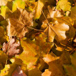 Lots of autumn leaves — Stock Photo