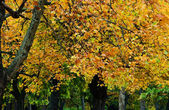 Parque en otoño — Foto de Stock