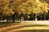 Sycamore in late october in park. — Stock Photo
