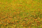 Yellow autumn leaves on green grass — ストック写真
