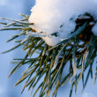 Christmas evergreen spruce tree with fresh snow — Stock Photo #7659541