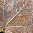 Abstract old frosted leaf covered with ice, winter details. — 图库照片 #7737679