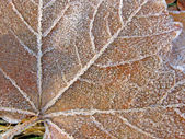 Abstract old frosted leaf covered with ice, winter details. — Stock Photo