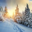 Winter landscape — Stock Photo #7227958