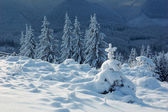 Zima w tle — Zdjęcie stockowe