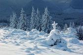 Fond hiver — Photo