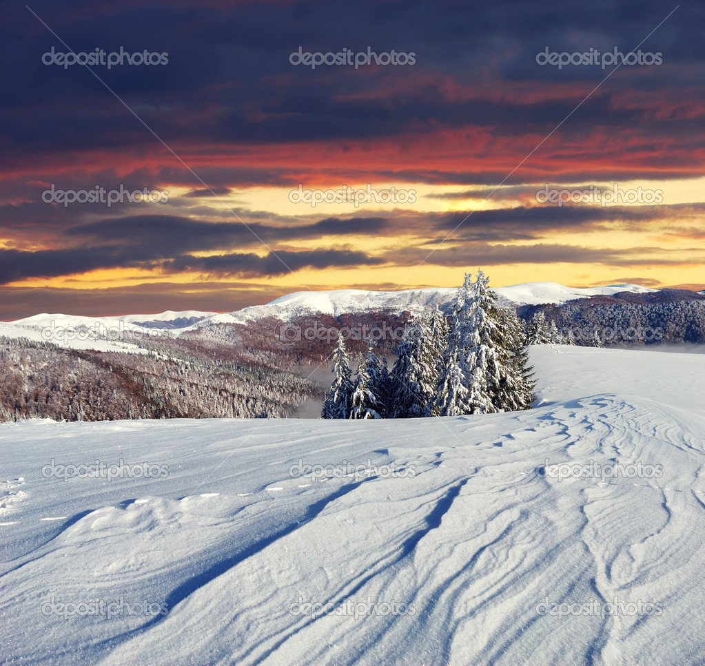 Winter landscape with fur-trees and fresh snow. Ukraine, Carpathians  Stock Photo #7542647