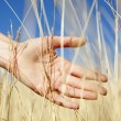 Women hand in autumn grass. — Stock Photo