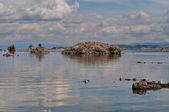 Lago mono — Foto de Stock