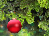 Christmas ball and green spruce branch — Stok fotoğraf