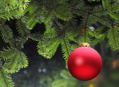 Red Christmas ball and green spruce branch — Stock Photo