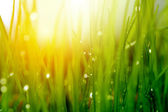 Soft green grass background — Stock Photo