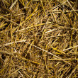 Straw texture — Stock Photo #7584858