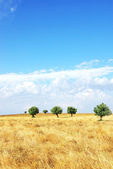 Field at Alentejo region, Portugal. — Stock Photo