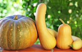 Small pumpkins in green background. — Stock Photo