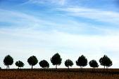 Silhouette row of pines tree — Stock Photo