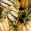 Garden gourds background — Stock Photo