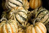 Garden gourds background — Stock Photo