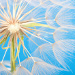 Dandelion closeup — Stock Photo